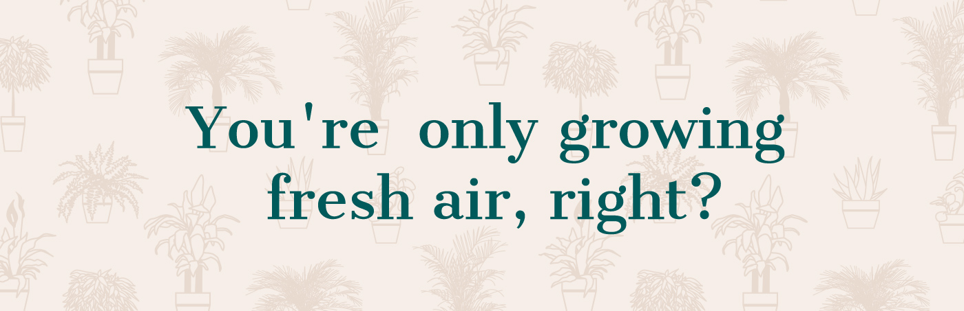 You're only growing fresh air, right?